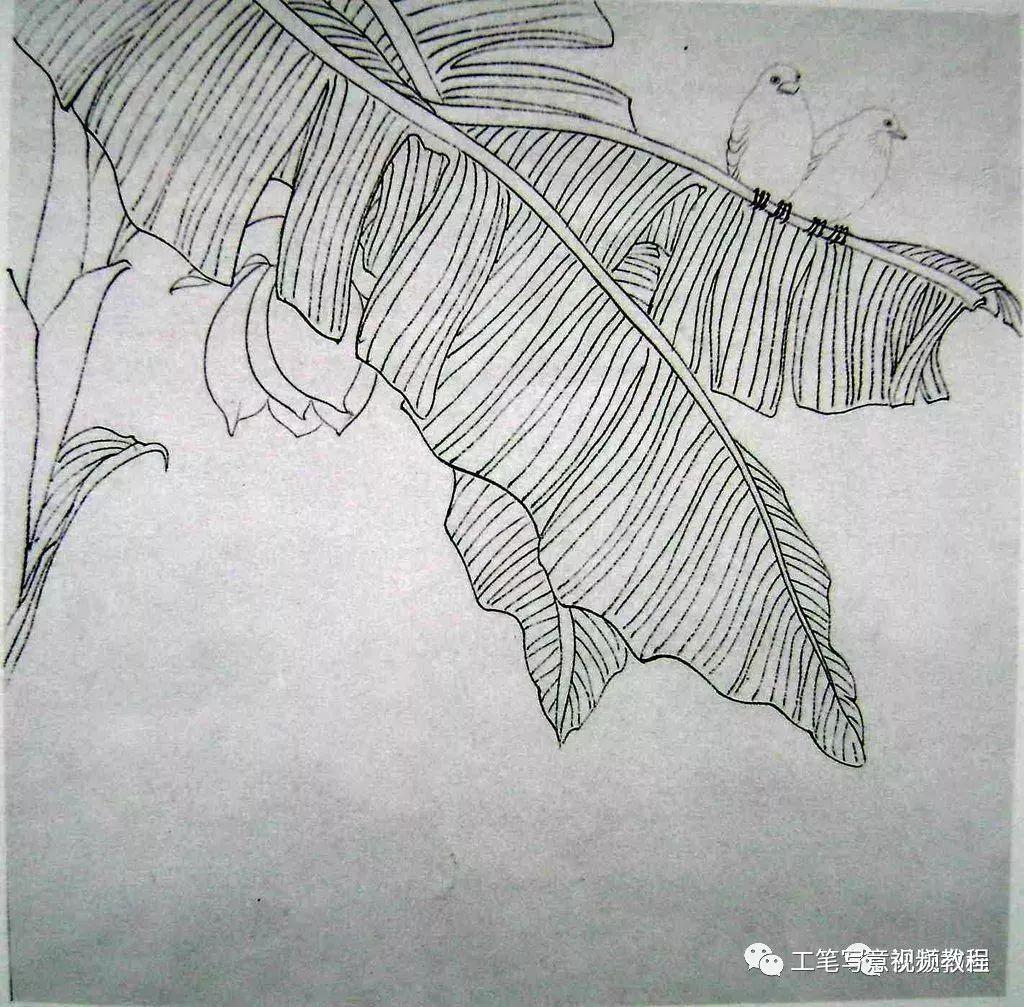 画法教程丨收藏几组视频花鸟画详细工笔,分享图解吧!宝马520操作说明转发图片