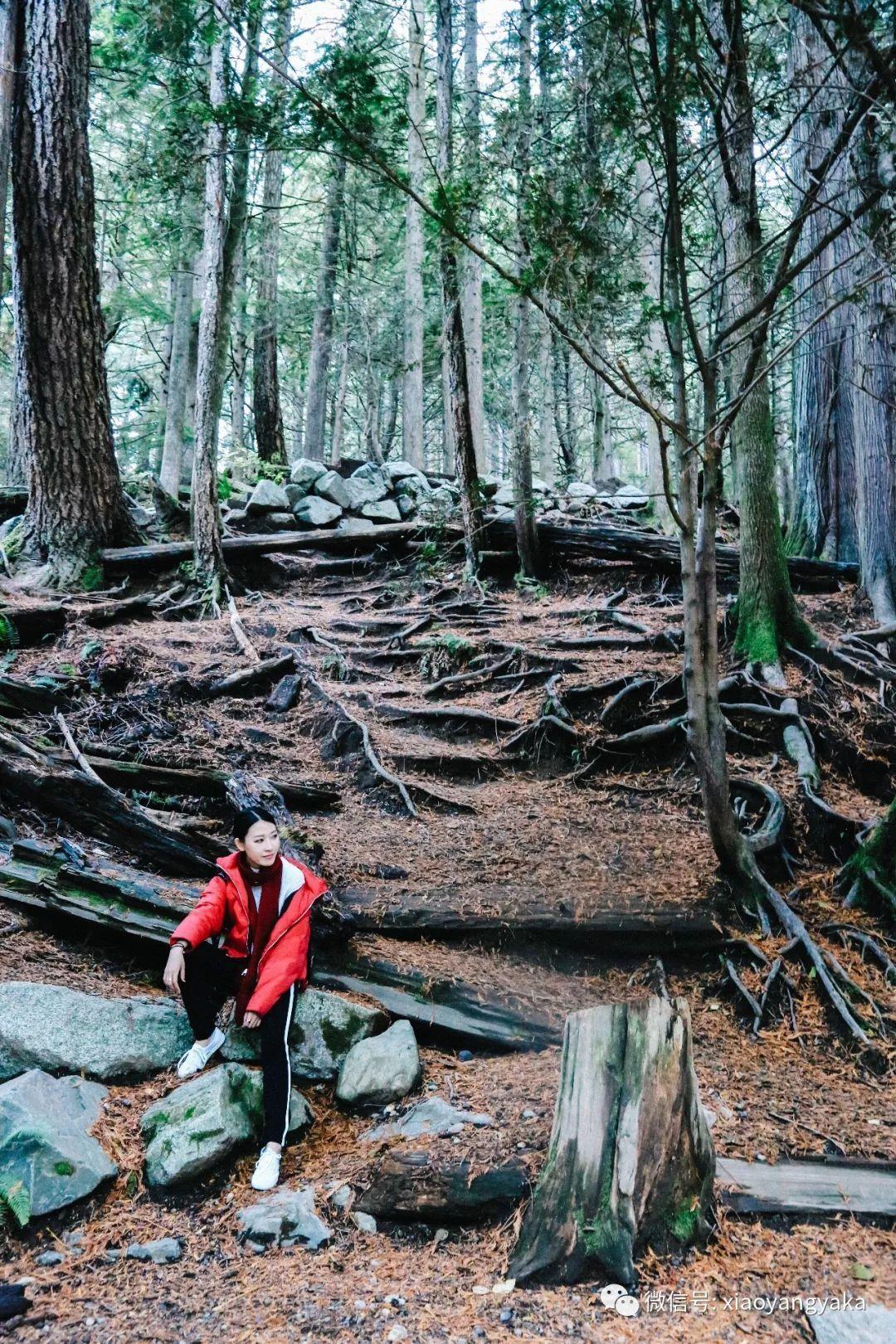 滑雪,徒步,登山,缆车……加拿大怎么玩?小众旅行地惠斯勒户外游玩推荐