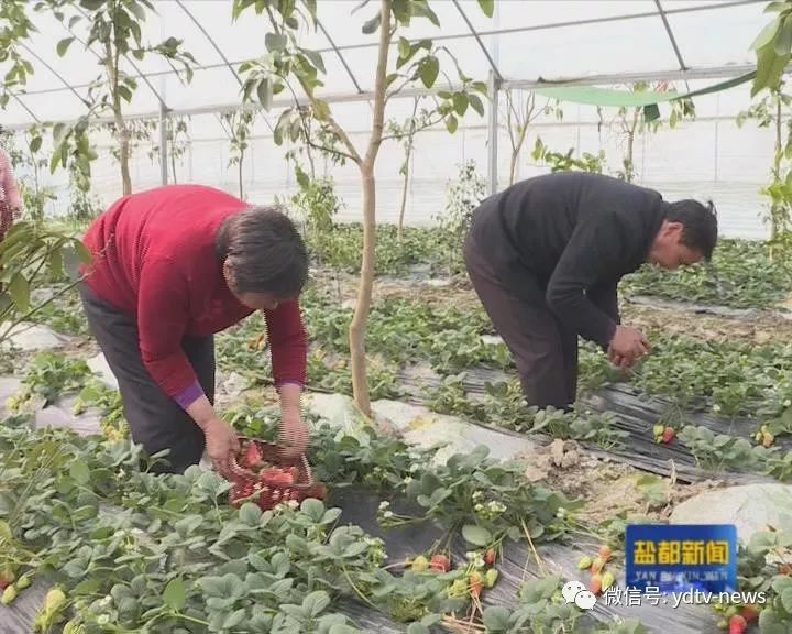 高效农业 | 调优农业产业结构 实现生态财富物质