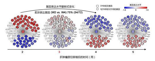 中国专家成功破译肝癌肺转移早期预警网络信号