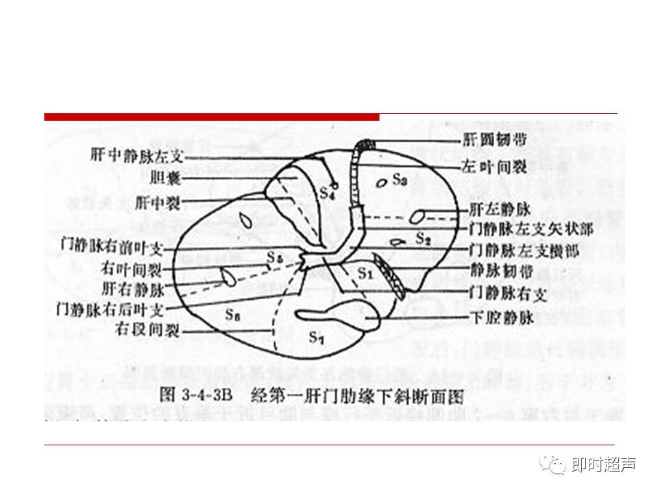 肝脏生理解剖结构_肝脏解剖及超声表现