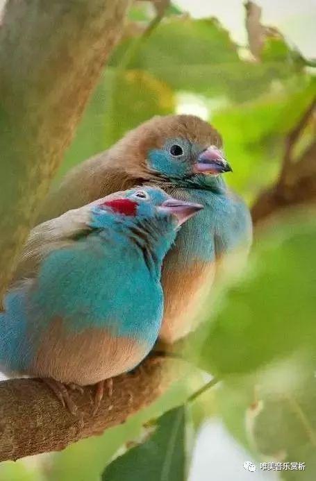 春天来了,听听《鸟语》,太美了!