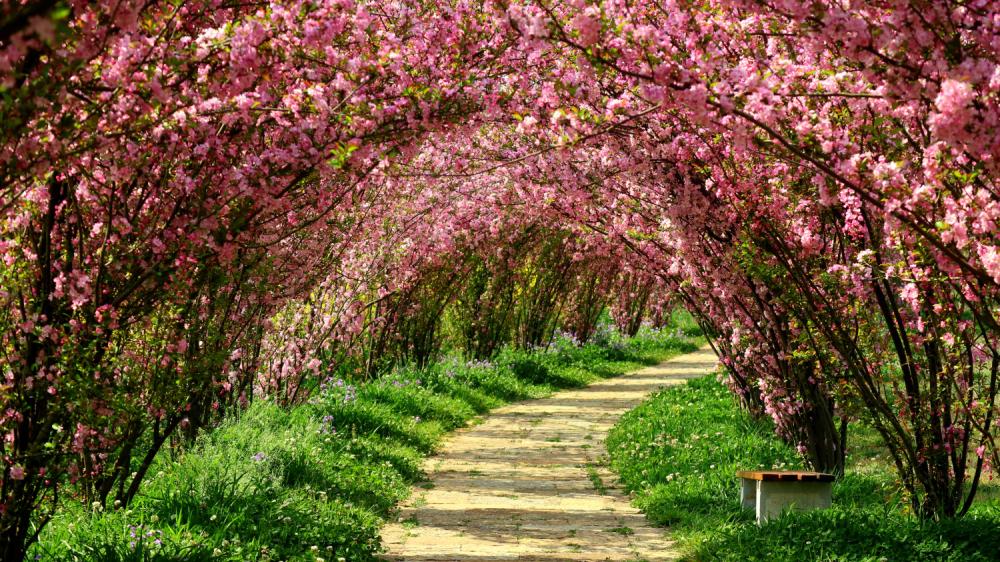 阳春三月,迷失在花花世界图片