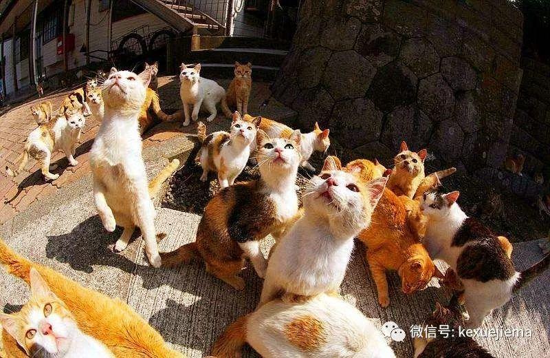 母猫做绝育手术多少钱图片