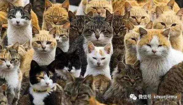 小猫做绝育手术多少钱图片