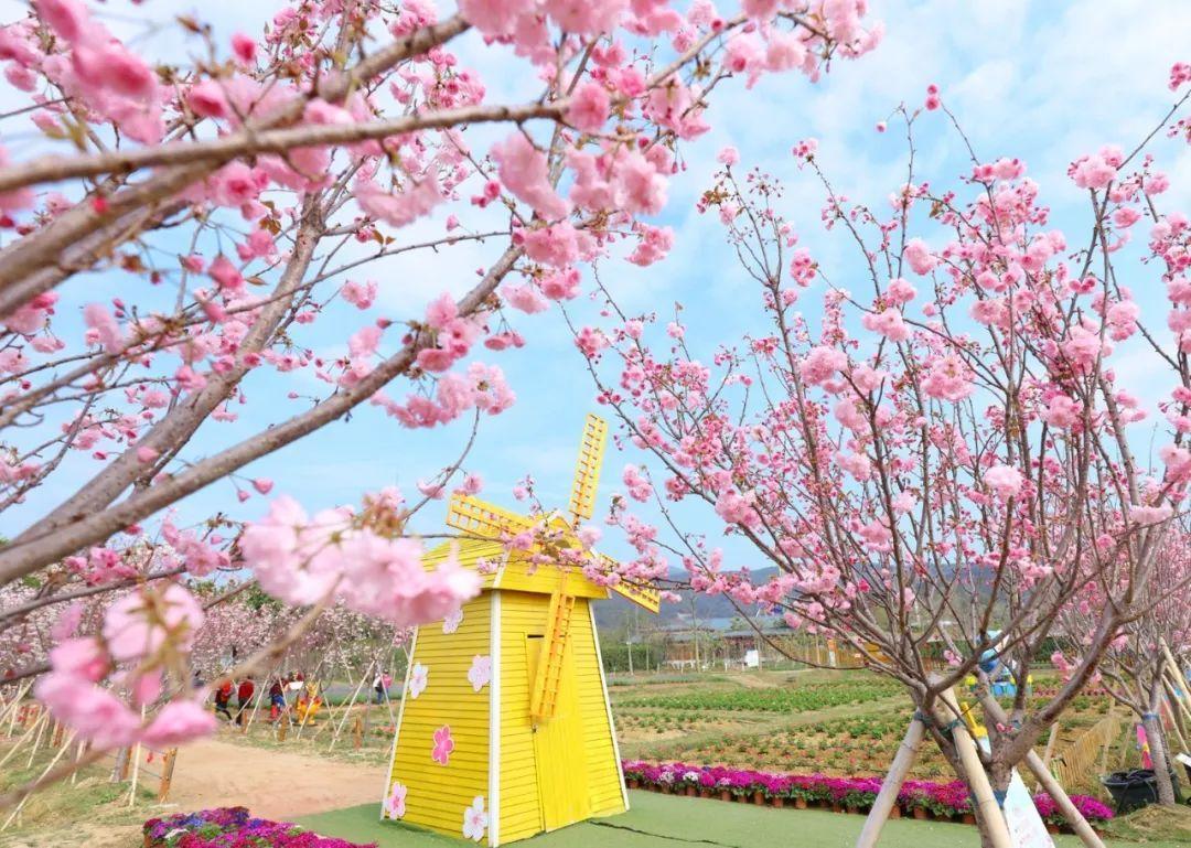 日本樱花歌曲_求日本歌曲,与爱情与樱花有关的-
