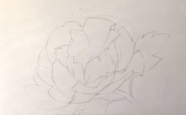 原标题:牡丹花到底要怎么画才漂亮?你不懂 用彩铅画一朵盛放的牡丹花 唐代刘禹锡有诗曰: 庭前芍药妖无格,池上芙蕖净少情。 唯有牡丹真国色,花开时节动京城。  彩铅牡丹 步骤详解 工具:辉柏嘉彩铅48色水溶、漫画纸、橡皮 【1】起稿 1、用铅笔画出花朵的大体外形,可先用大直线确定它的花瓣位置。
