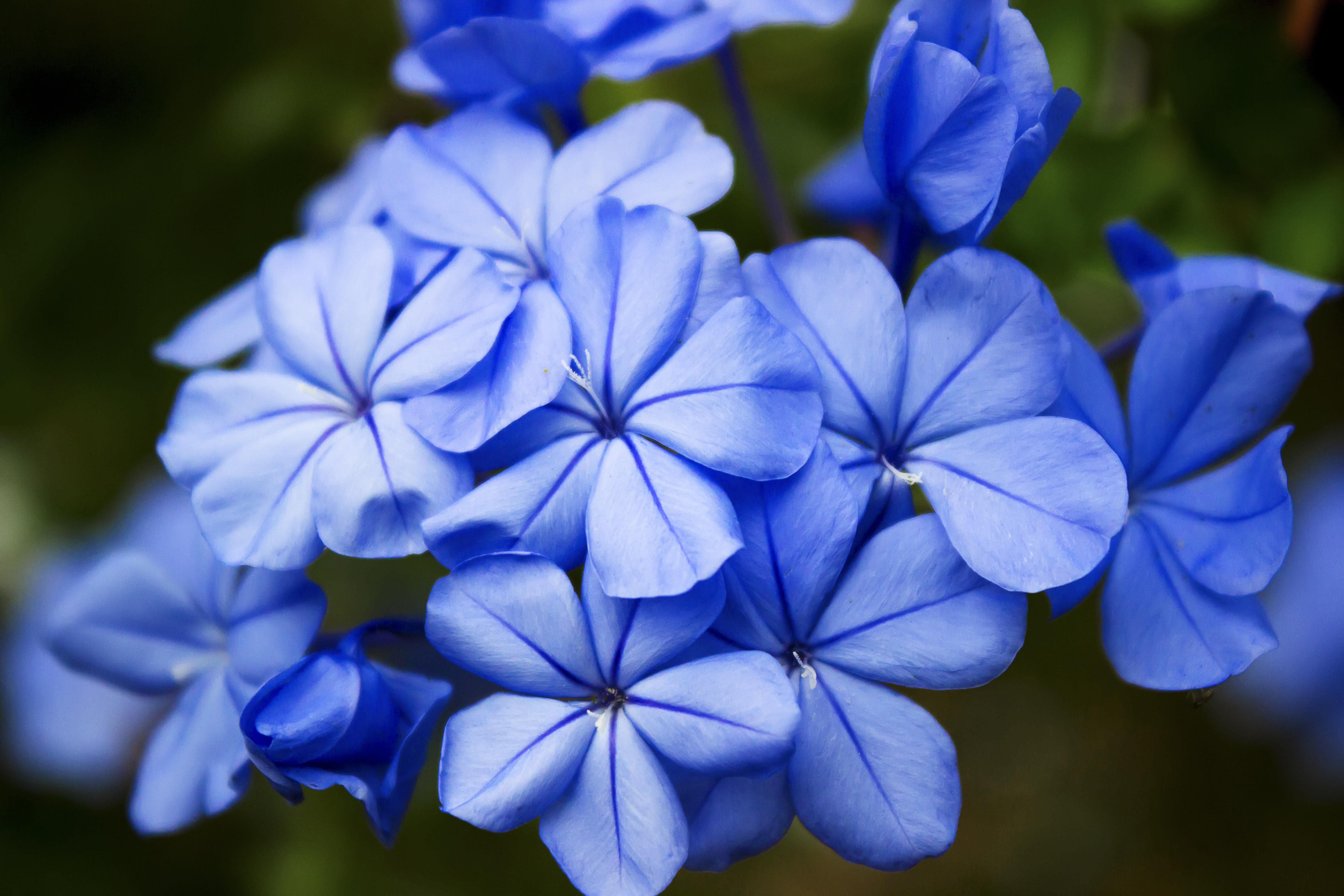 蓝漠的花阿紫图片