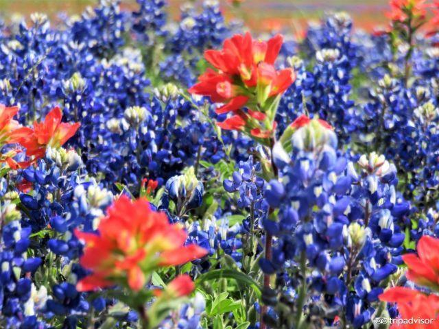 全球8大赏花圣地 | 中国哪个城市的樱花竟然能媲美京都?