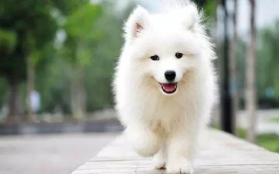 【狗年旺旺】12星座标配犬种,快来看看你的星运气座6月17日射手图片