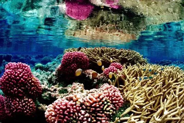 大堡礁的各方面都得到了很好的展示,从美丽的珊瑚礁到支撑这个美丽