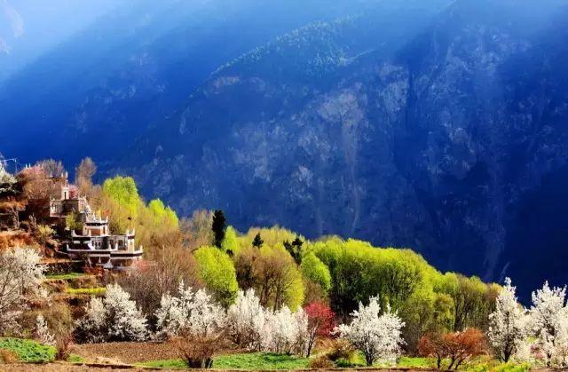 """3月这个""""小西藏""""的万亩花田已悄然成海,今年赏花就来这里!"""