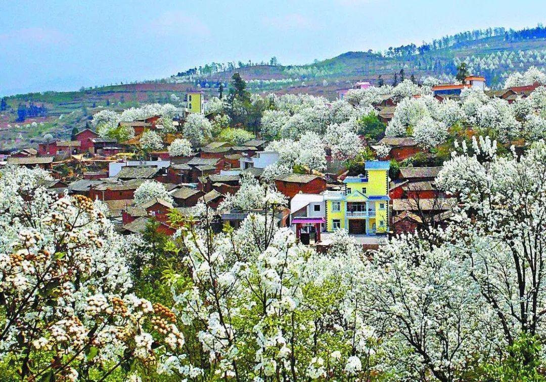 云南加级寨万亩梨花,开出地球上最美的春天,现在去正好!