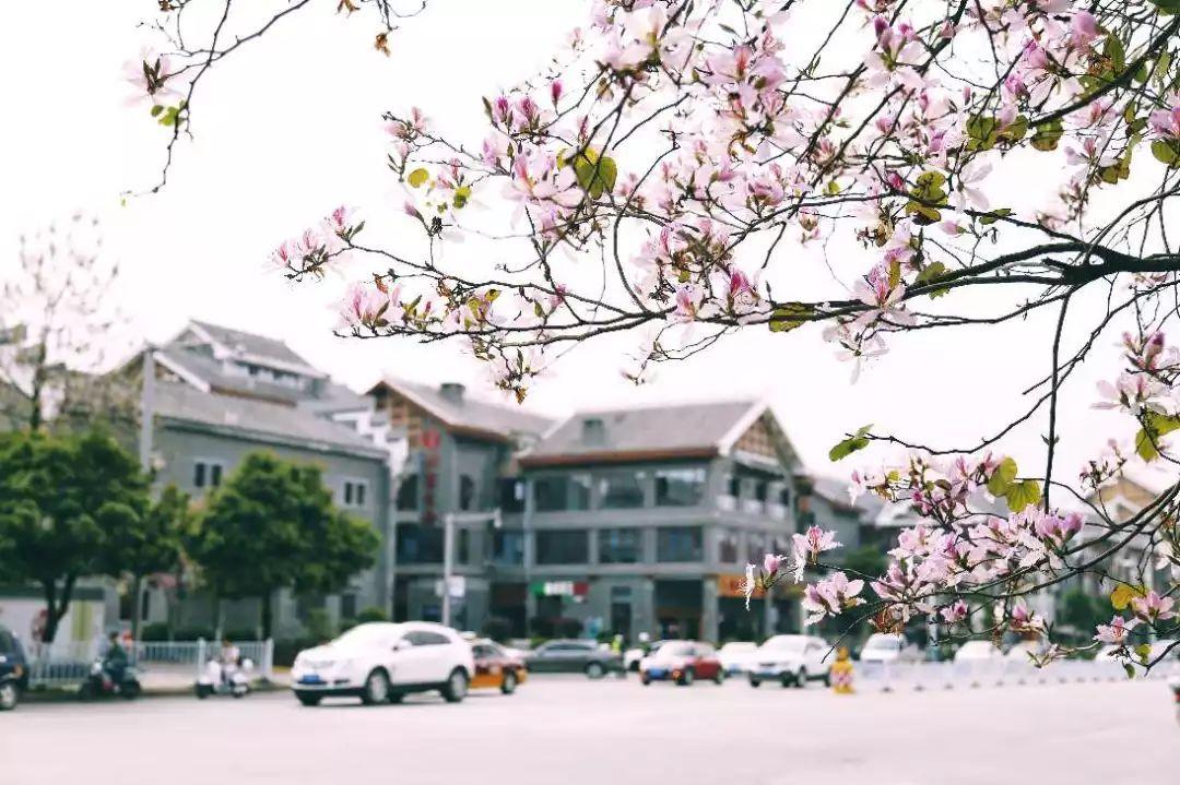 2018年度柳州经济总量_柳州莫菁