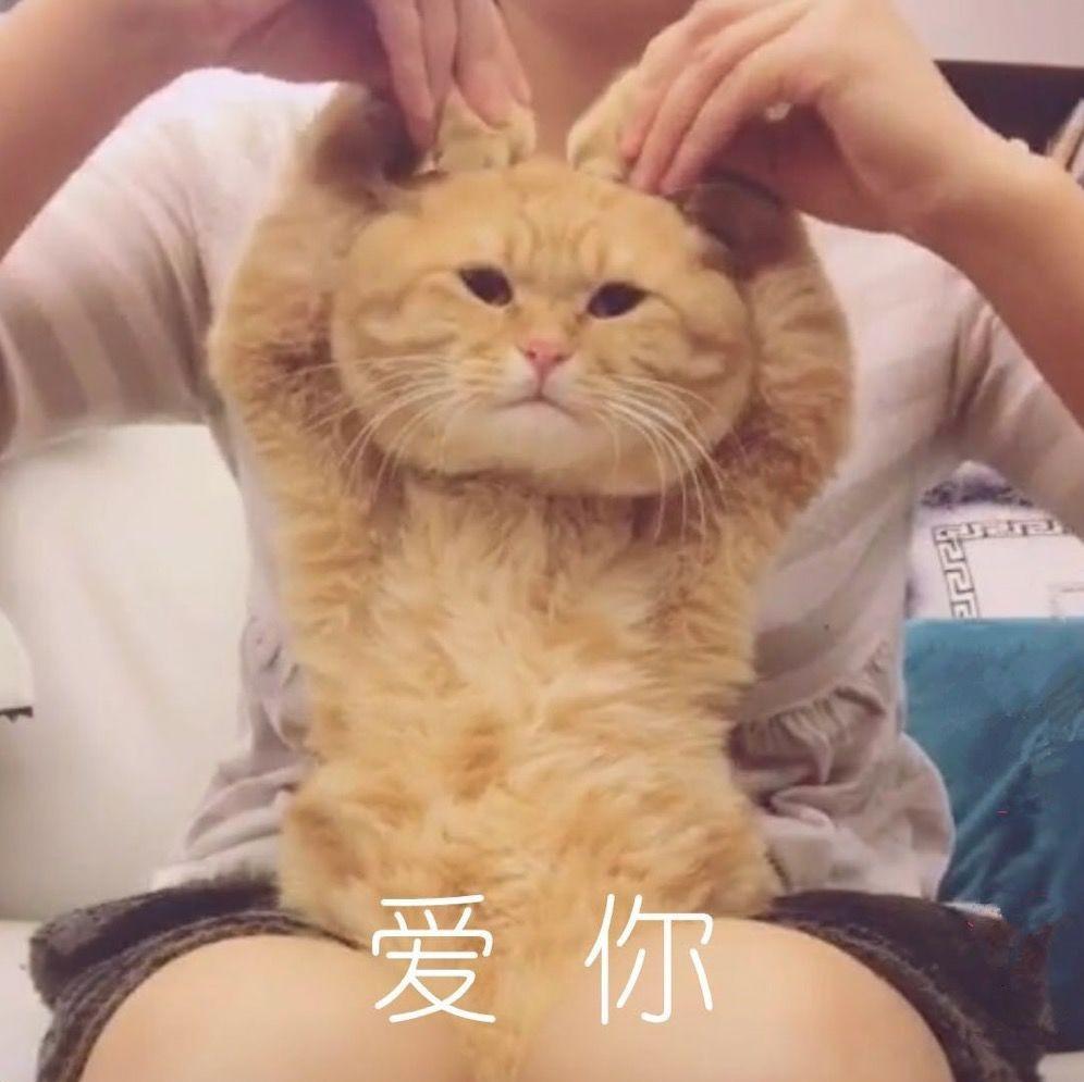 猫咪视频_被主人强制录视频的猫咪,给那个比心的小动作跪了!
