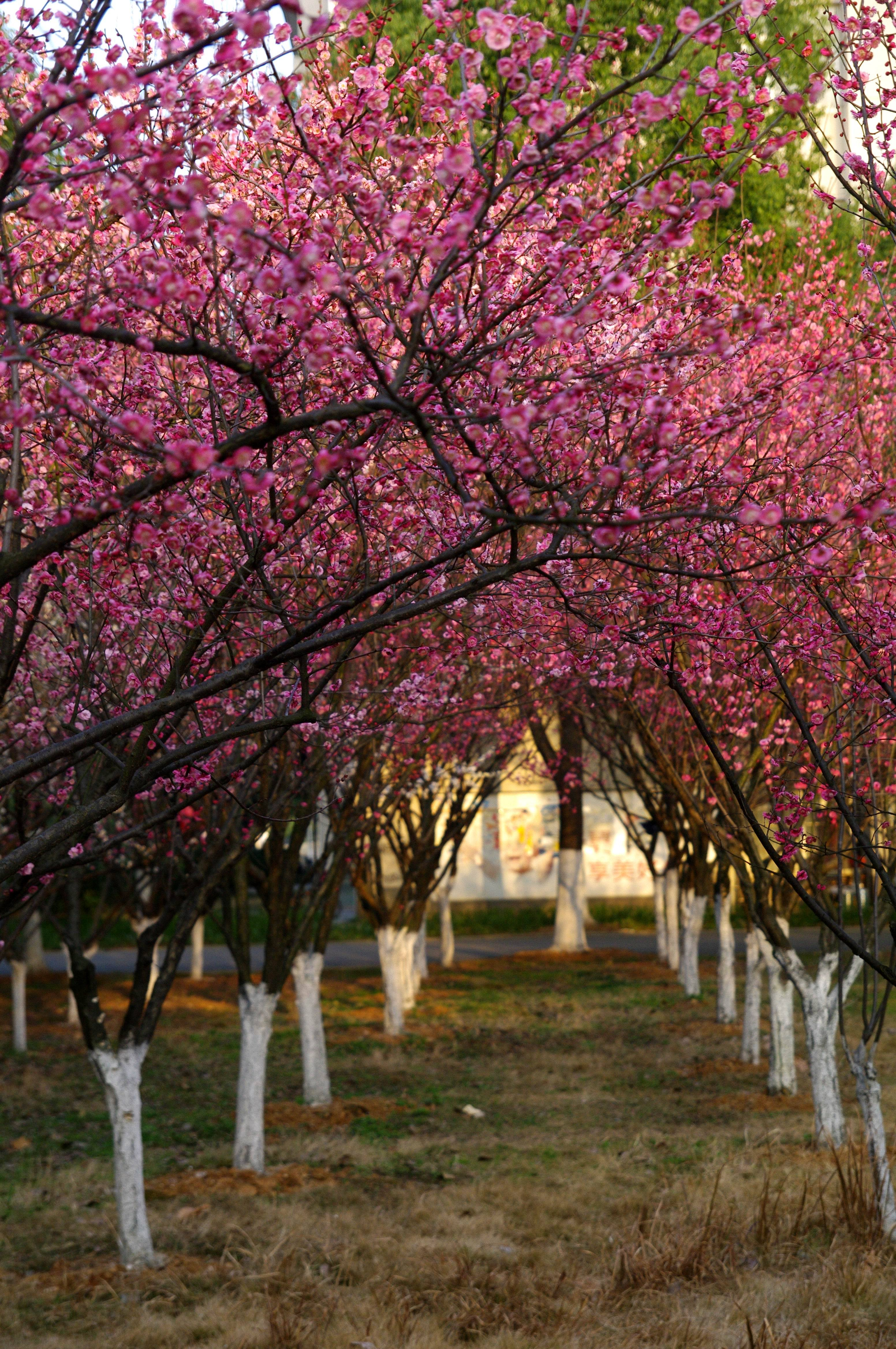 春天里,武汉的4种使用方式