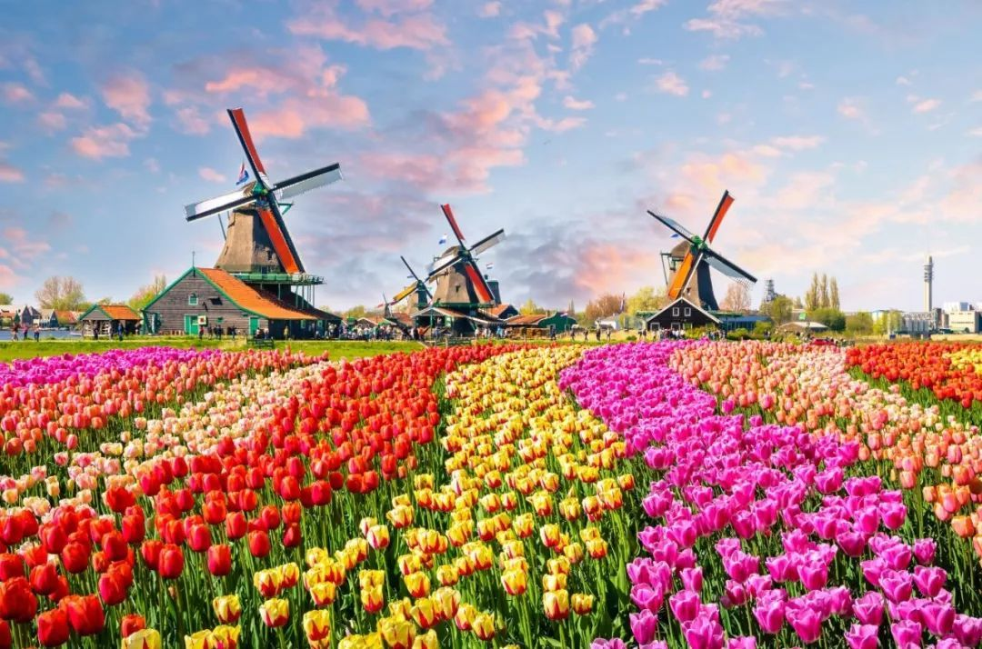 踏青赏春景丨从德国莱茵古堡到荷兰郁金香,追寻欧洲