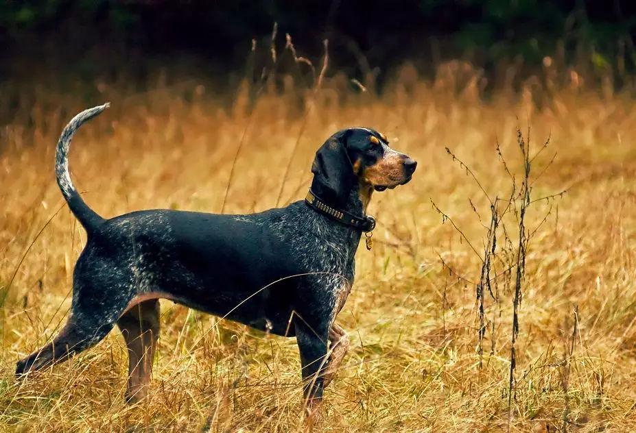 娱乐 正文  《诗经》里有首诗是写狗帮人抓兔子的,而且根据记载,以前