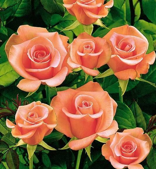 娱乐 正文  赠人玫瑰,手有余香.