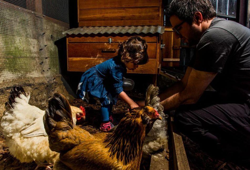 砸12万盖鸡舍、配厨师喂食三文鱼牛排… 硅谷精英如此养鸡遭网友吐槽