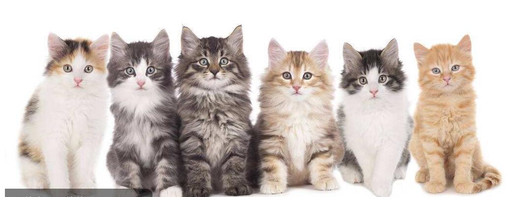 [治愈系萌宠加盟费表情包]猫咪表情爱亲亲大合集,让猫图片