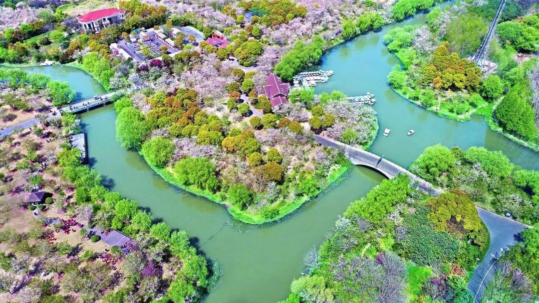 1.2万株樱花组成精彩的樱花浪~2018上海樱花节最大提前看,实在是美!模拟城市攻略游手图片