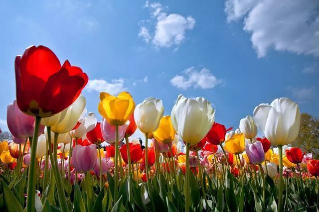 西安周末去哪儿玩 西安春天踏春赏春赏花这些地方每一处都是风景图片