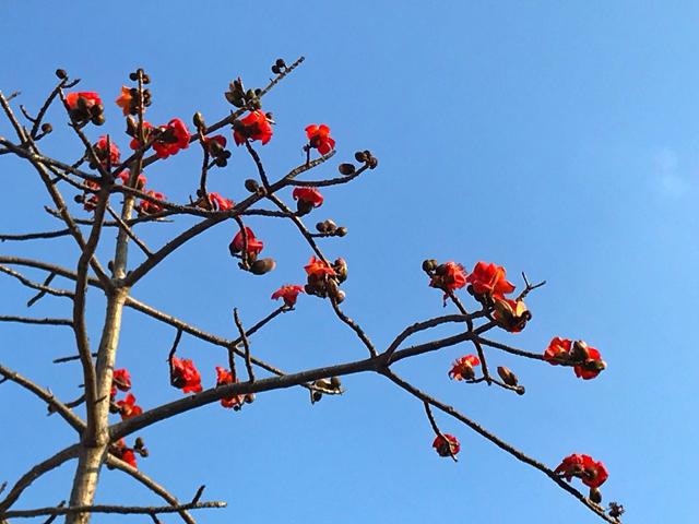 春暖花开春意浓,赏花踏青正当时!