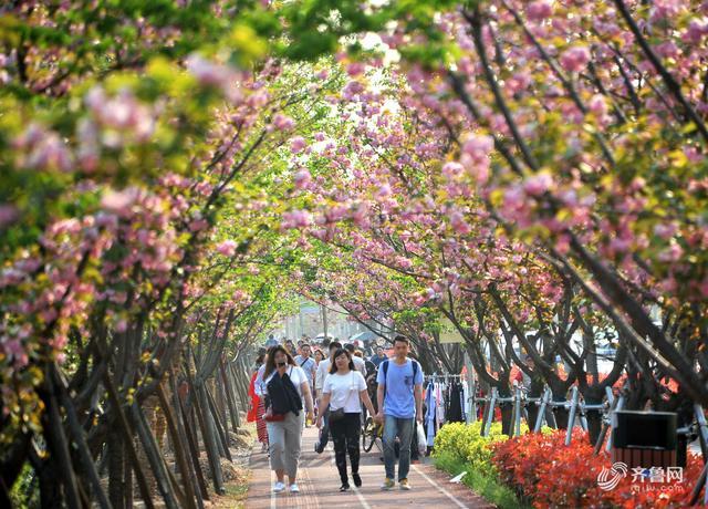 三月粉色樱花季 15处赏樱胜地撩动你的少女心