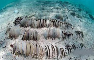 澳门威尼斯人官网;中国传说中的10大宝藏