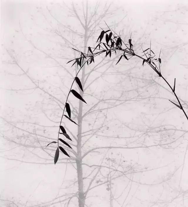 一个英国摄影师,竟拍出了水墨中国的神韵! 2018-03-12 16:51 英国 说起水墨画,大家首先想到的肯定是用笔墨纸砚层层渲染、意境深邃的国画。孰不知,用相机也能拍出传统水墨的美感,不仅气韵生动而且意境悠远。但最令人意想不到的是,这影师竟来自英国名叫 Michael Kenna。  我们先来看看他06年来中国桂林漓江的时候拍摄的照片:          照片中画面干净利落,构图小中见大,远山层叠、薄雾笼罩犹如传统水墨中墨色的浓淡交织。          同样的,群峰林立的黄山在他镜头下少了几分险峻危 - 亮堂堂 - 广亮博客