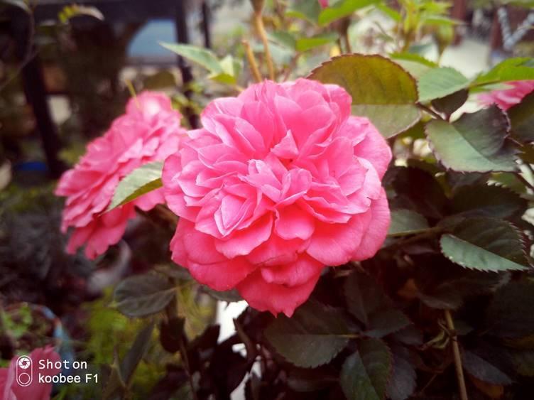 阳春三月,koobee f1 镜头下的初春原来这么美图片