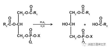 具体的反应位点请参见图1的分子式以及图2和图3的反应方程式.图片