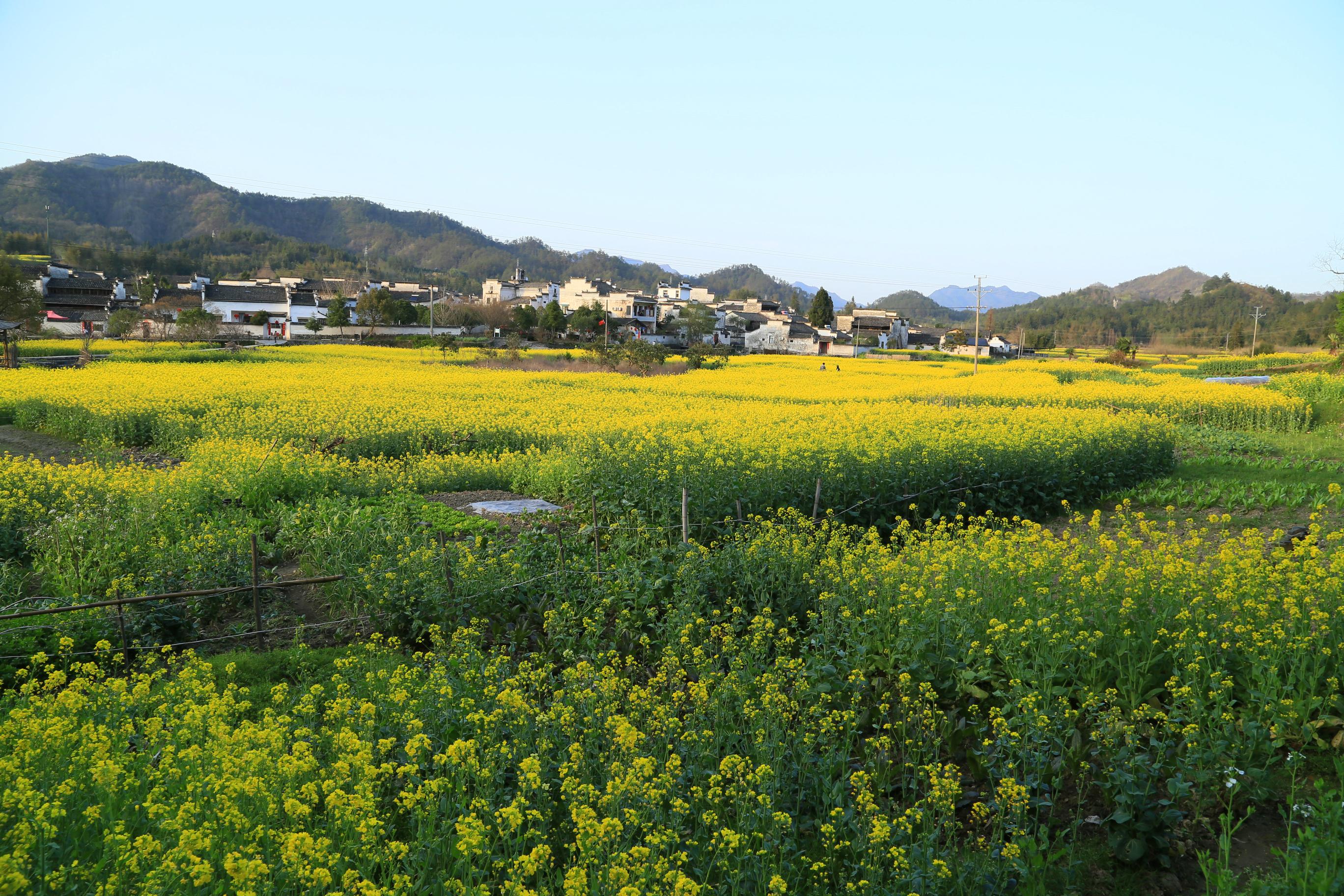 这是徽州最美的小县城,宏村西递都在名下,为何输给了油菜花