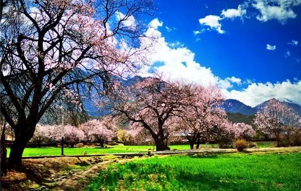 林芝桃花节近在咫尺,哪些地方的桃花有多又好看,你知道吗?