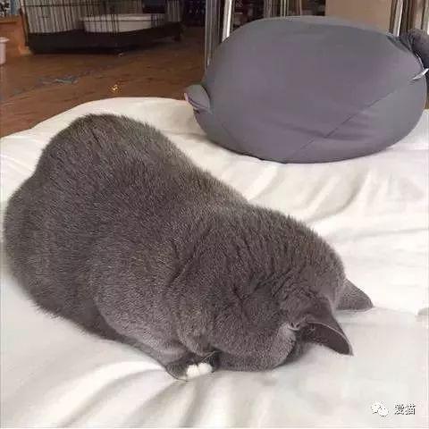 猫咪的埋头睡超可爱,但你知道背后的真正原因吗?