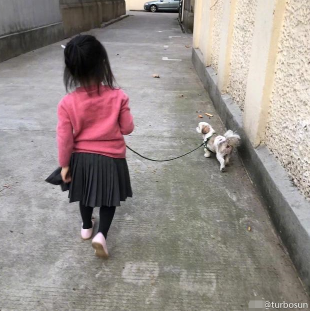 孙俪的妈妈照片_孙俪女儿小花手牵三只狗狗 背影超萌超可爱