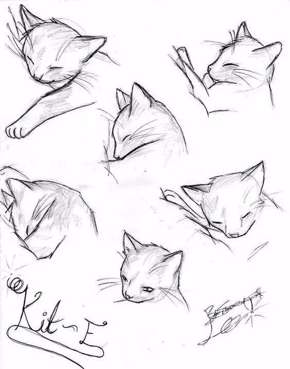 08· 狮子的简笔画