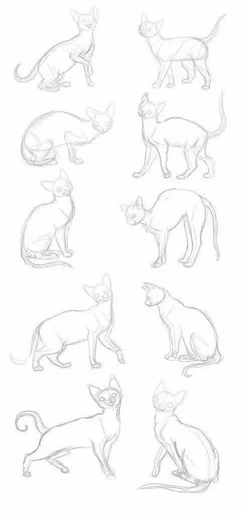 · 狮子的画法 ·