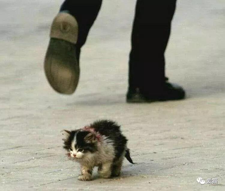 它是流浪猫,但你没有资格嘲笑它丑。
