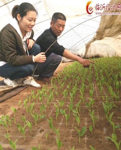 郯城:农民种玉米先育苗一亩省下300元