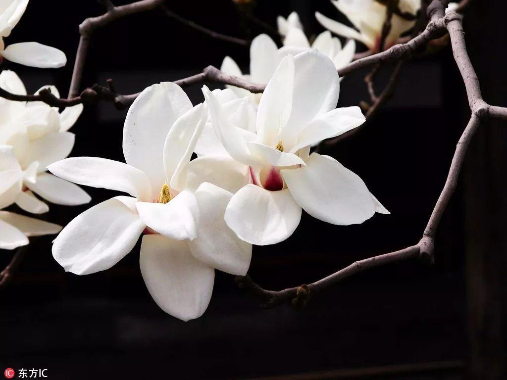 一个月后的北京将是全国最美的地方!55旅游达人推荐的这些赏花圣地错过又要等一年!