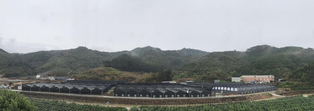 花拾网走访参观泉州景圃生物科技有限公司催花基地