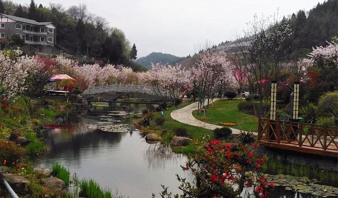 旅游 正文  新蒲樱花谷地处洛安江生态文明示范区核心区,占地1000余亩