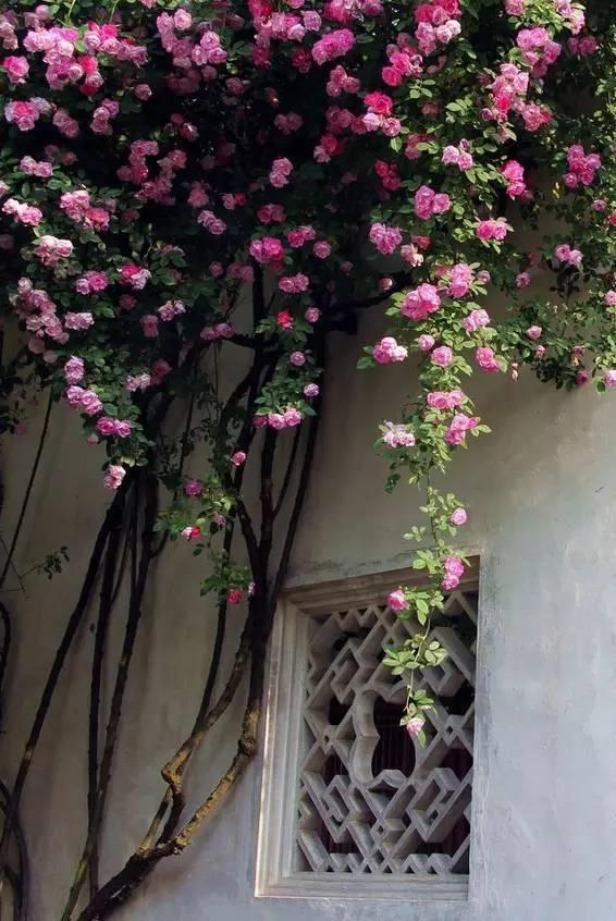有一种美,穿越千年! 2018-03-17 17:54   精致的格子,完美的构图,每一个角度,都可以剪一窗风景如画。  古韵古香的窗格,在整个建筑中成了独到的风景。沉淀着传统文化的美,穿越千年而来,依然美好如斯。    若能有个小院,最好推窗即可看花,琴棋书画诗酒花茶,一团花影,一缕花香,足以生动所有的日常。      精致的格子,完美的构图,每一个角度,都可以剪一窗风景如画。        凝结着一份智慧和灵巧的心思,移步借景,窗内限定的画面是美妙,窗外可以想象的空间是无限的。无论内外,都描画出一幅极 - 亮堂堂 - 广亮博客