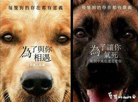 犬类智商排名_犬类品种大全图片