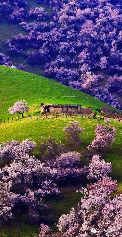4月开始,新疆将变成中国最美的地方!