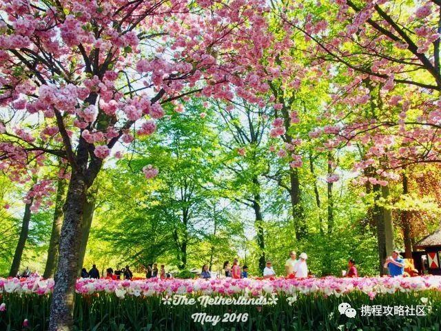 据说这里有世界上最美的春天!遍地鲜花风景看不够,下个月必去!