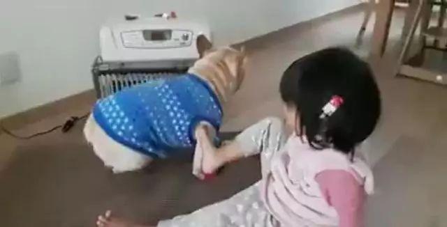 狗狗和珍珍尽先暧风机,拳打脚丫儿子踢争夺,信直像兵戈壹样!