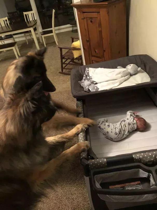 狗子看着刚出生的小主人:为啥长得不像我呢!